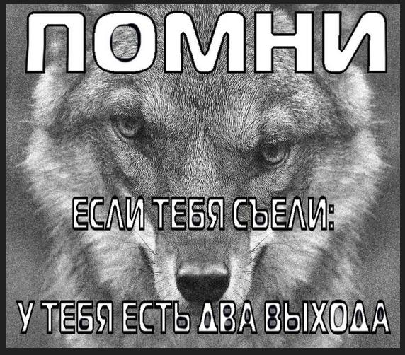 Цитата-про-волков-мем-№-2.jpg
